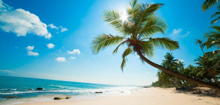 1025612_caribbean-beach-palm-tree-wallpapers_2560x1600_h